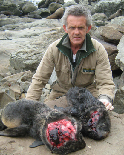Seals killed Ohau Point