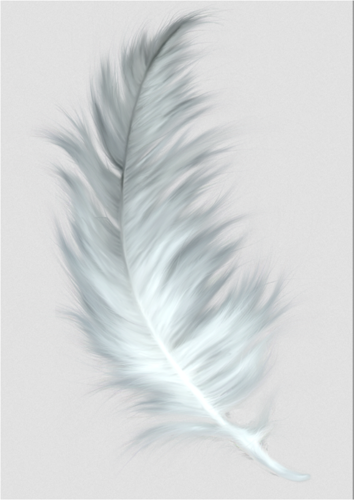 falling feathers png - 699×987