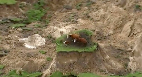 cows-on-quake-island